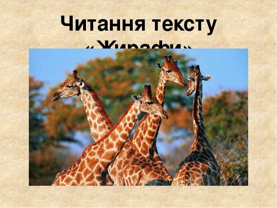 Читання тексту «Жирафи»