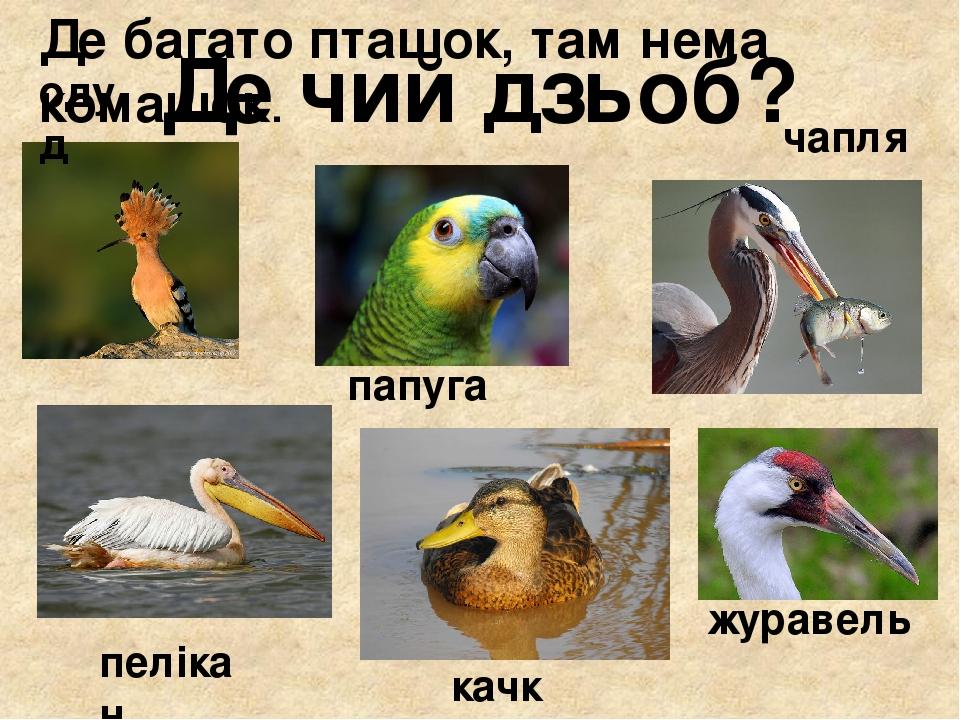 Де чий дзьоб? одуд папуга чапля пелікан качка журавель Де багато пташок, там нема комашок.