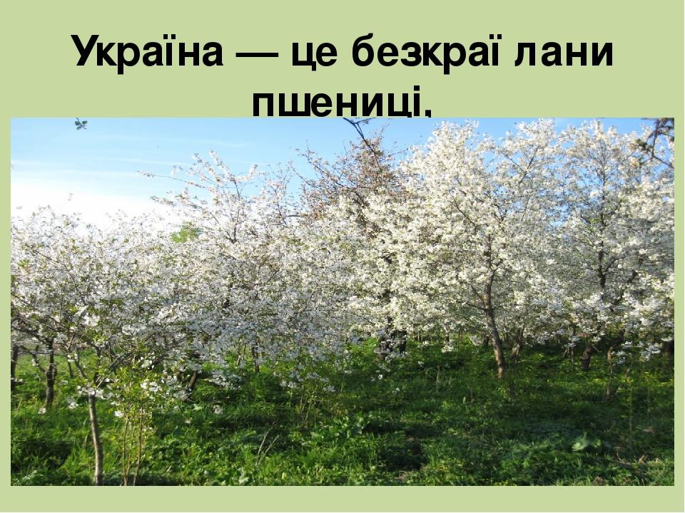 Україна — це безкраї лани пшениці, квітучі поля льону, вишневі сади.