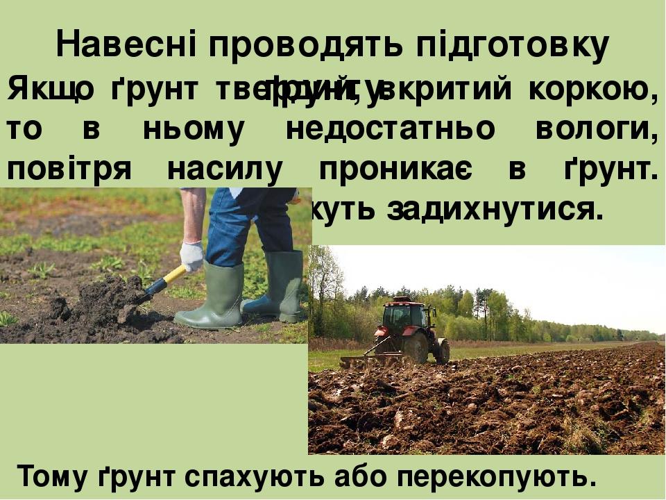 Якщо ґрунт твердий, вкритий коркою, то в ньому недостатньо вологи, повітря насилу проникає в ґрунт. Корені рослин можуть задихнутися. Тому ґрунт сп...