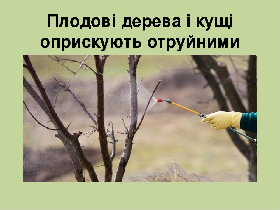Плодові дерева і кущі оприскують отруйними речовинами, які знищують комах-шкідників.