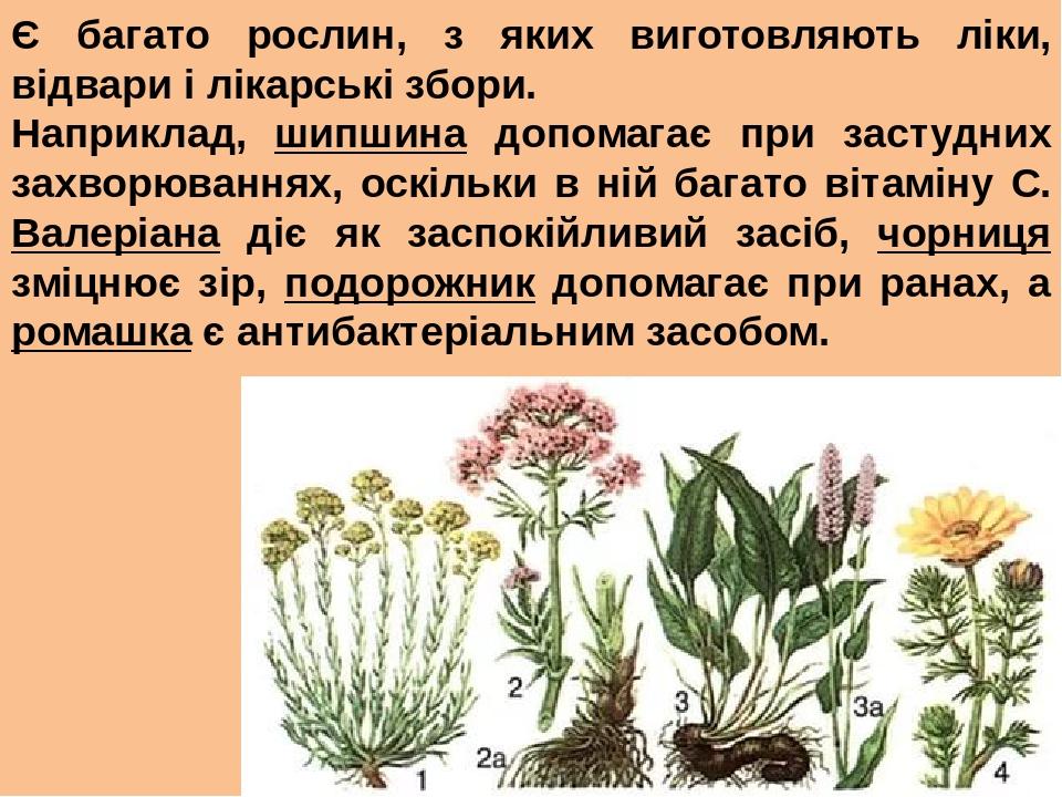 Є багато рослин, з яких виготовляють ліки, відвари і лікарські збори. Наприклад, шипшина допомагає при застудних захворюваннях, оскільки в ній бага...