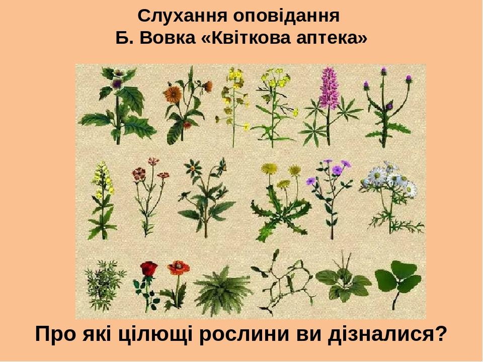 Слухання оповідання Б. Вовка «Квіткова аптека» Про які цілющі рослини ви дізналися?