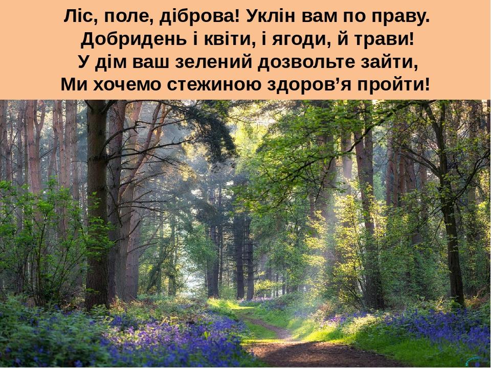 Ліс, поле, діброва! Уклін вам по праву. Добридень і квіти, і ягоди, й трави! У дім ваш зелений дозвольте зайти, Ми хочемо стежиною здоров'я пройти!
