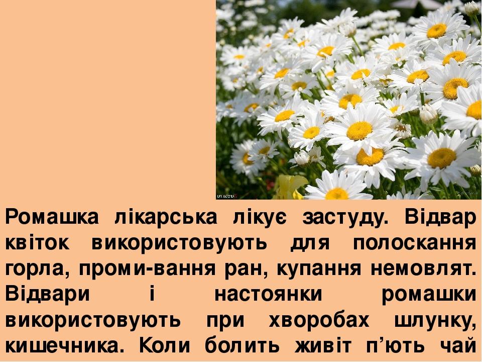 Ромашка лікарська лікує застуду. Відвар квіток використовують для полоскання горла, проми-вання ран, купання немовлят. Відвари і настоянки ромашки ...