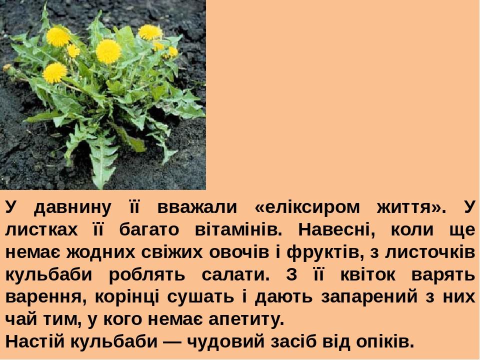 У давнину її вважали «еліксиром життя». У листках її багато вітамінів. Навесні, коли ще немає жодних свіжих овочів і фруктів, з листочків кульбаби ...