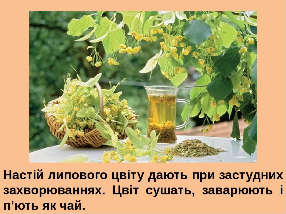 Настій липового цвіту дають при застудних захворюваннях. Цвіт сушать, заварюють і п'ють як чай.