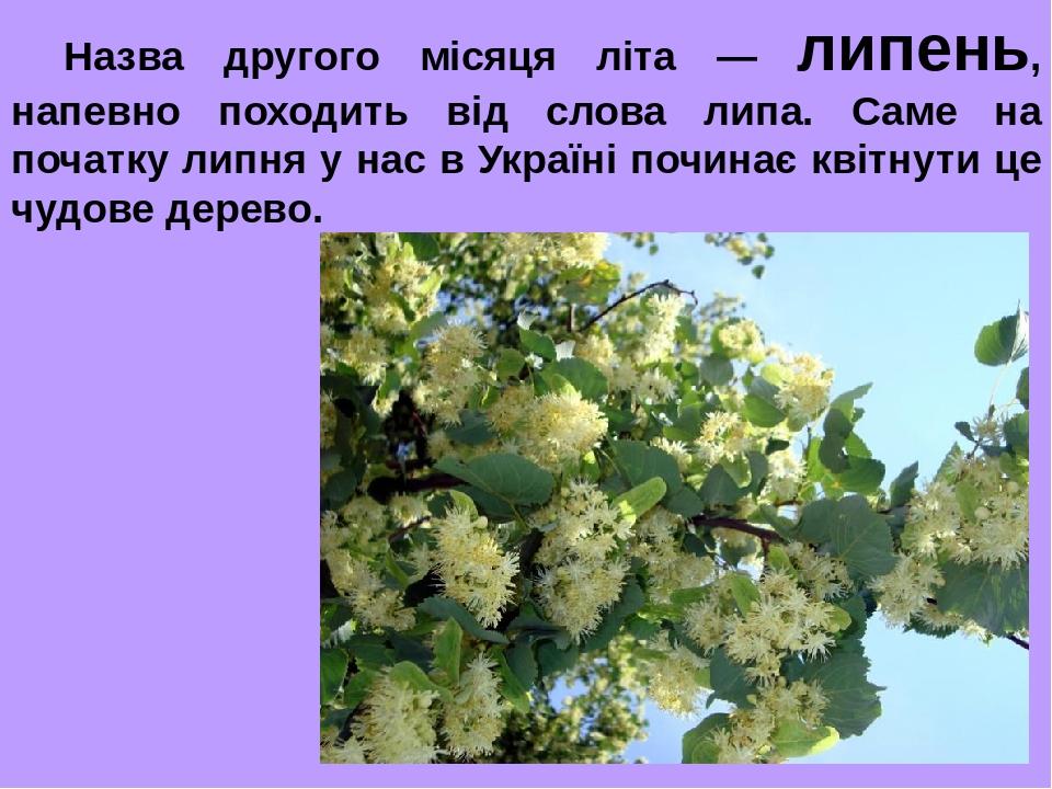 Назва другого місяця літа — липень, напевно походить від слова липа. Саме на початку липня у нас в Україні починає квітнути це чудове дерево.