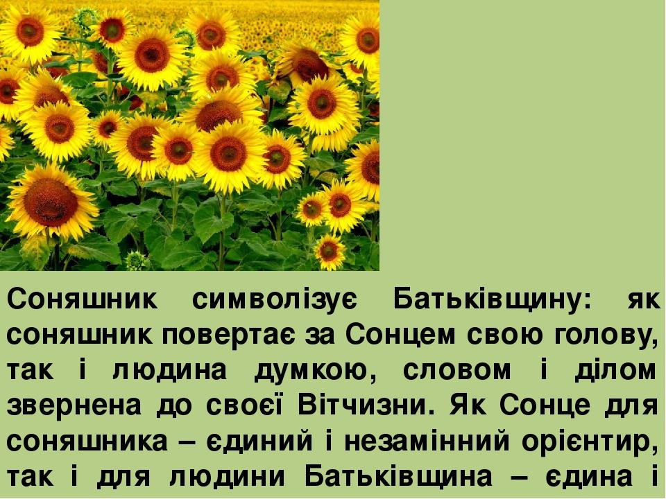 Соняшник символізує Батьківщину: як соняшник повертає за Сонцем свою голову, так і людина думкою, словом і ділом звернена до своєї Вітчизни. Як Сон...