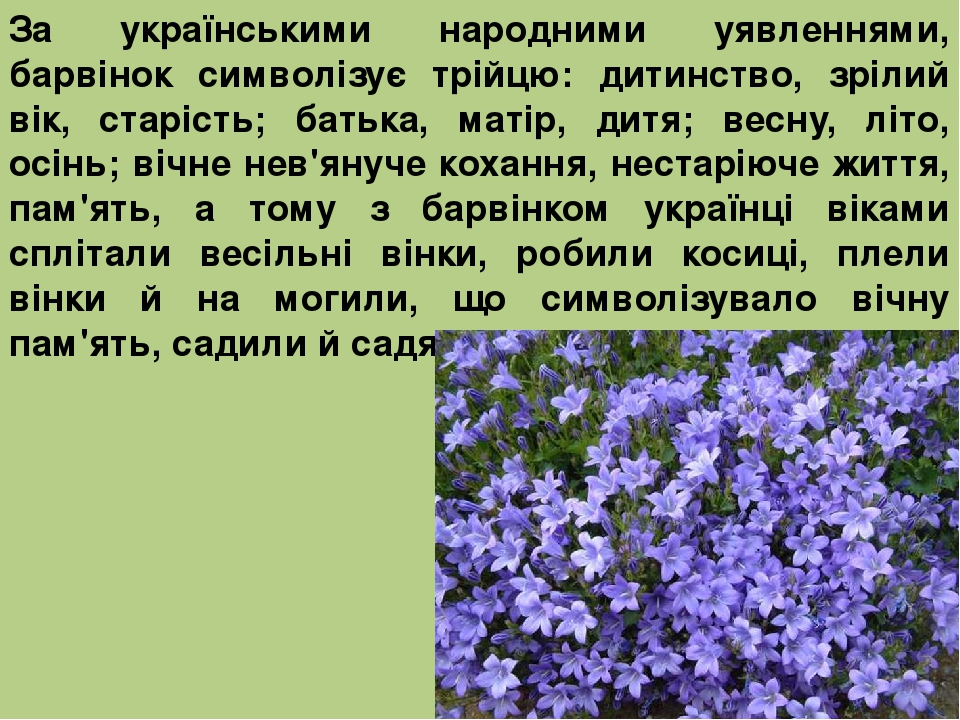 За українськими народними уявленнями, барвінок символізує трійцю: дитинство, зрілий вік, старість; батька, матір, дитя; весну, літо, осінь; вічне н...