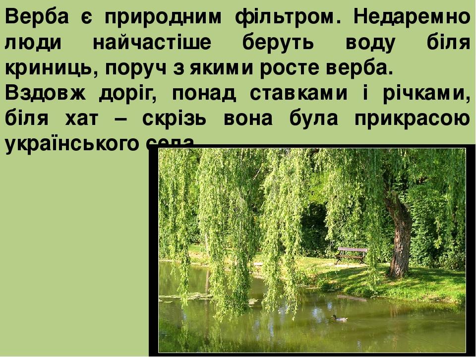 Верба є природним фільтром. Недаремно люди найчастіше беруть воду біля криниць, поруч з якими росте верба. Вздовж доріг, понад ставками і річками, ...