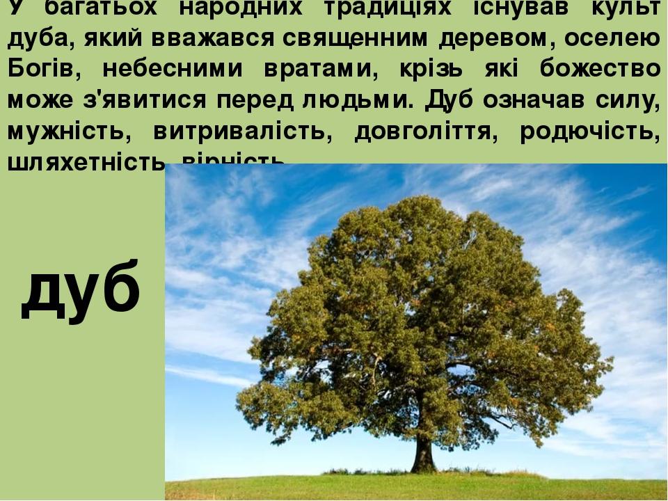 У багатьох народних традиціях існував культ дуба, який вважався священним деревом, оселею Богів, небесними вратами, крізь які божество може з'явити...