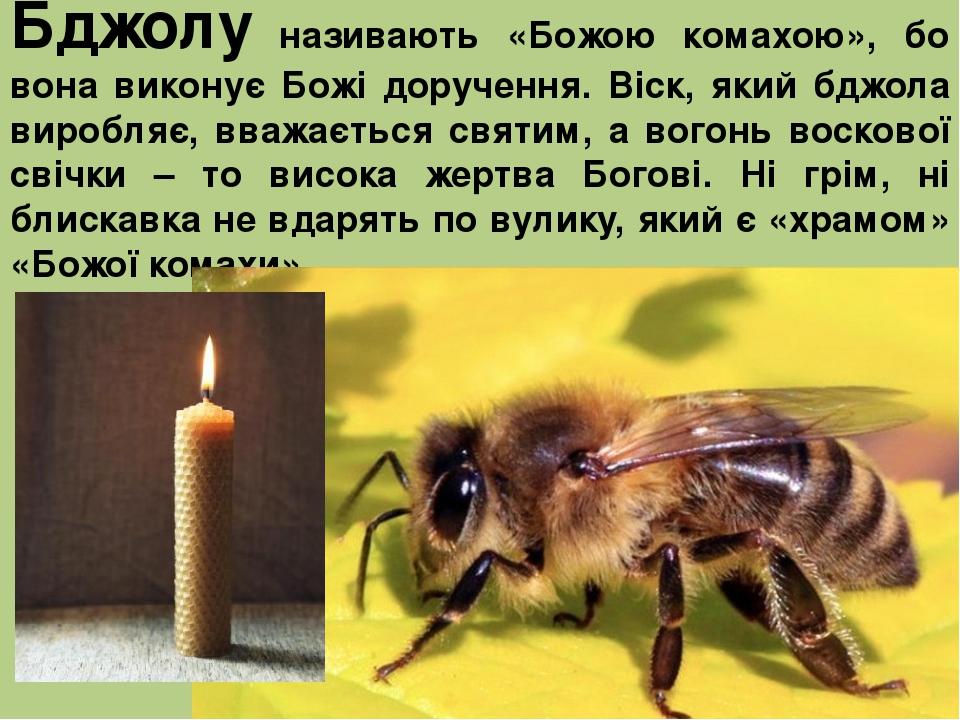 Бджолу називають «Божою комахою», бо вона виконує Божі доручення. Віск, який бджола виробляє, вважається святим, а вогонь воскової свічки – то висо...
