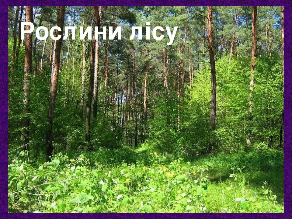 Рослини лісу