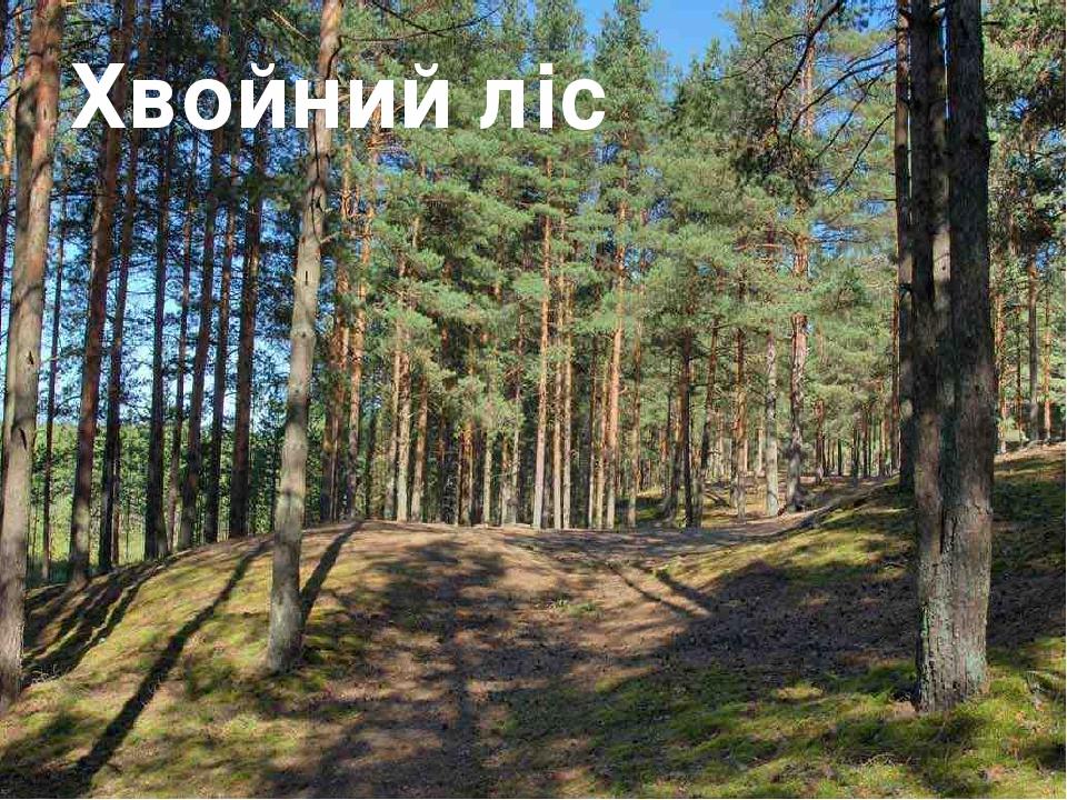 Хвойний ліс