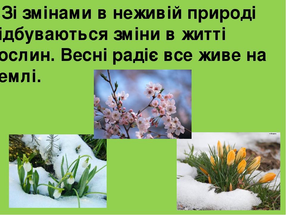 Зі змінами в неживій природі відбуваються зміни в житті рослин. Весні радіє все живе на Землі.