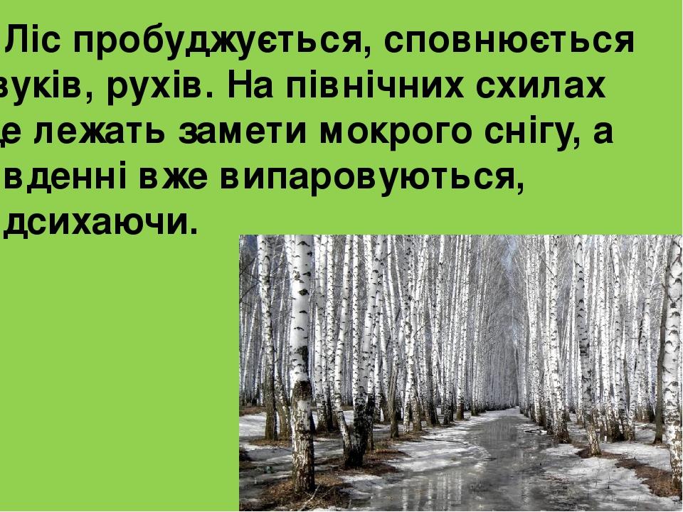 Ліс пробуджується, сповнюється звуків, рухів. На північних схилах ще лежать замети мокрого снігу, а південні вже випаровуються, підсихаючи.