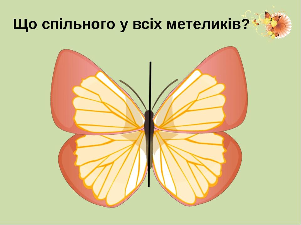 Що спільного у всіх метеликів?