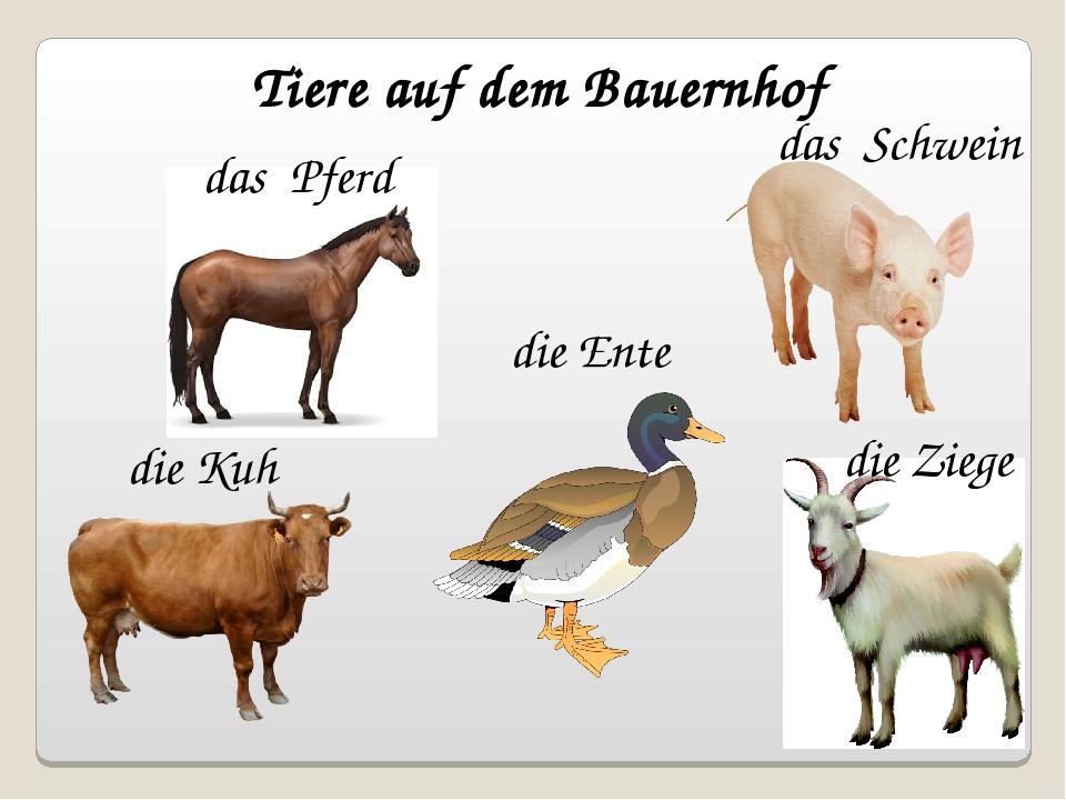 Tiere auf dem Bauernhof die Kuh die Ente die Ziege das Pferd das Schwein