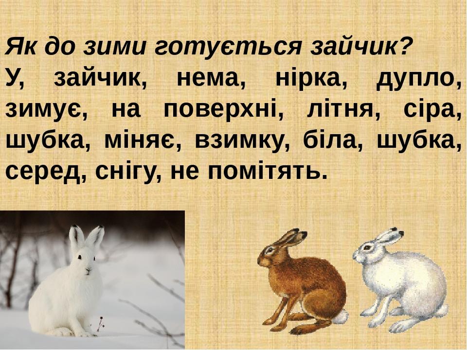 Як до зими готується зайчик? У, зайчик, нема, нірка, дупло, зимує, на поверхні, літня, сіра, шубка, міняє, взимку, біла, шубка, серед, снігу, не по...