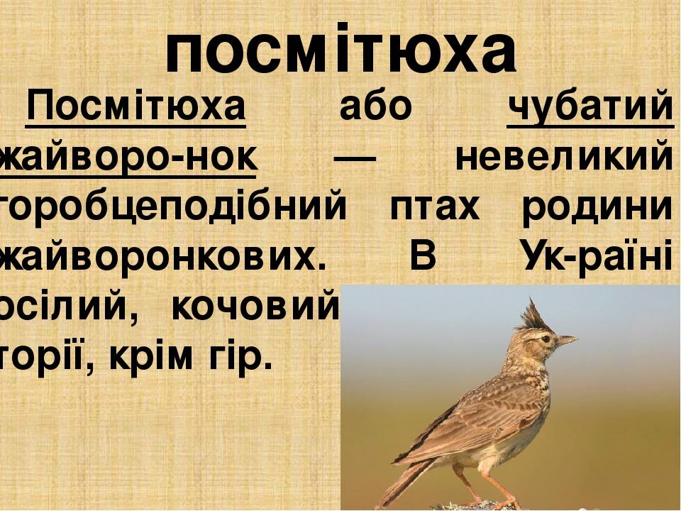 посмітюха Посмітюха або чубатий жайворо-нок — невеликий горобцеподібний птах родини жайворонкових. В Ук-раїні осілий, кочовий на всій тери-торії, к...