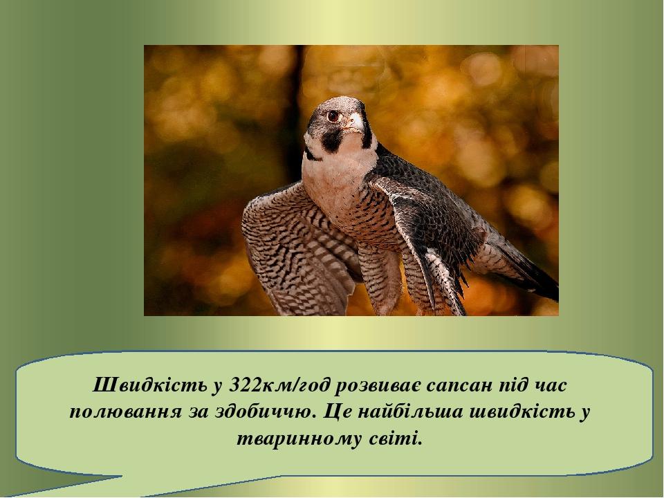 Швидкістьу 322км/годрозвиває сапсан під час полювання за здобиччю. Це найбільша швидкість у тваринному світі.