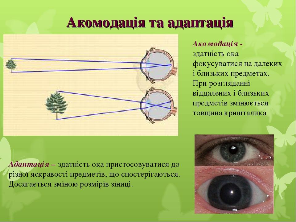 Акомодація та адаптація Адаптація – здатність ока пристосовуватися до різної яскравості предметів, що спостерігаються. Досягається зміною розмірів ...