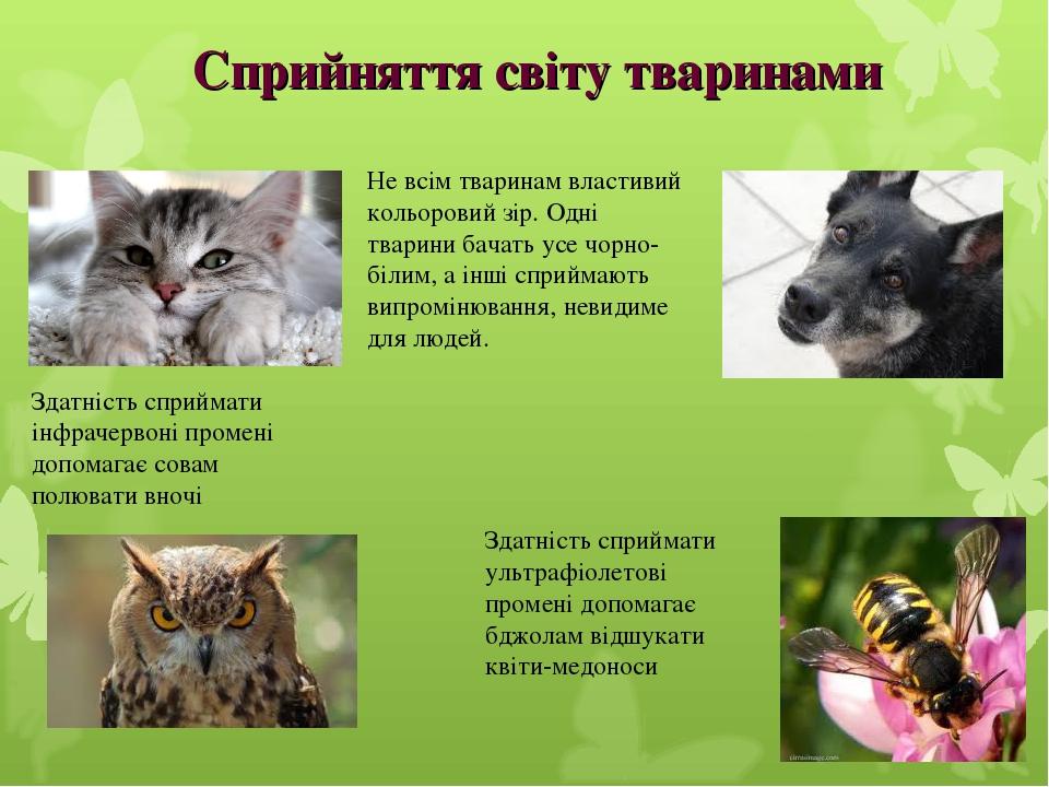 Не всім тваринам властивий кольоровий зір. Одні тварини бачать усе чорно-білим, а інші сприймають випромінювання, невидиме для людей. Здатність спр...