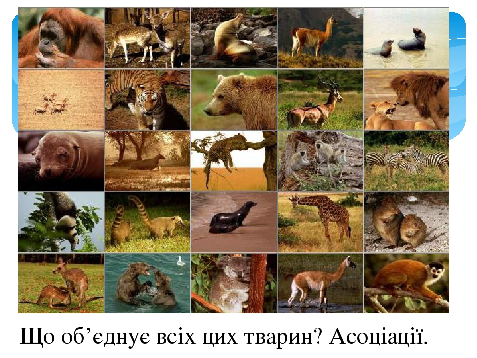 Що об'єднує всіх цих тварин? Асоціації.