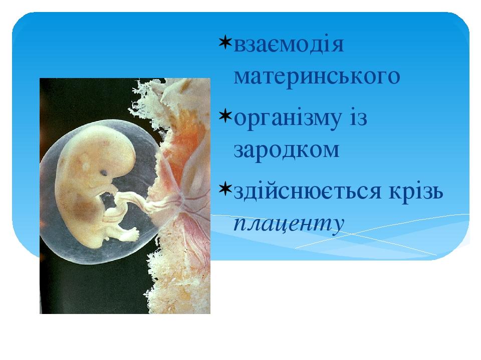 взаємодія материнського організму із зародком здійснюється крізь плаценту