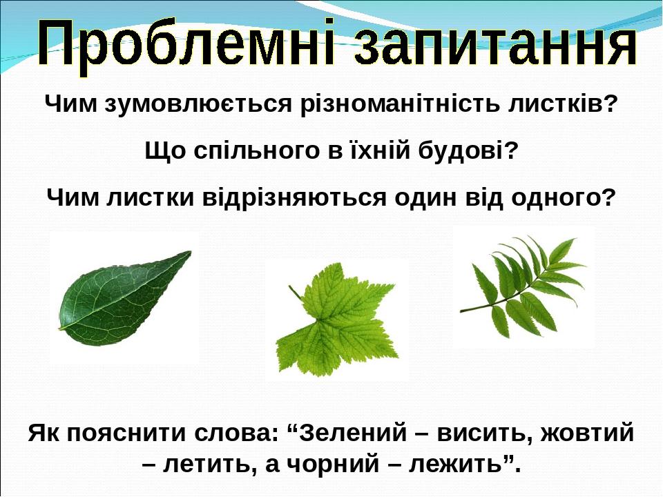 """Чим зумовлюється різноманітність листків? Що спільного в їхній будові? Чим листки відрізняються один від одного? Як пояснити слова: """"Зелений – виси..."""