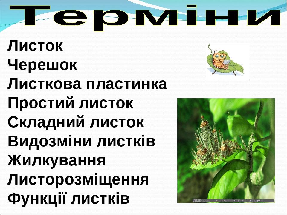 Листок Черешок Листкова пластинка Простий листок Складний листок Видозміни листків Жилкування Листорозміщення Функції листків