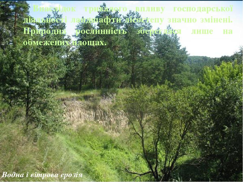 Внаслідок тривалого впливу господарської діяльності ландшафти лісостепу значно змінені. Природна рослинність збереглася лише на обмежених площах. В...