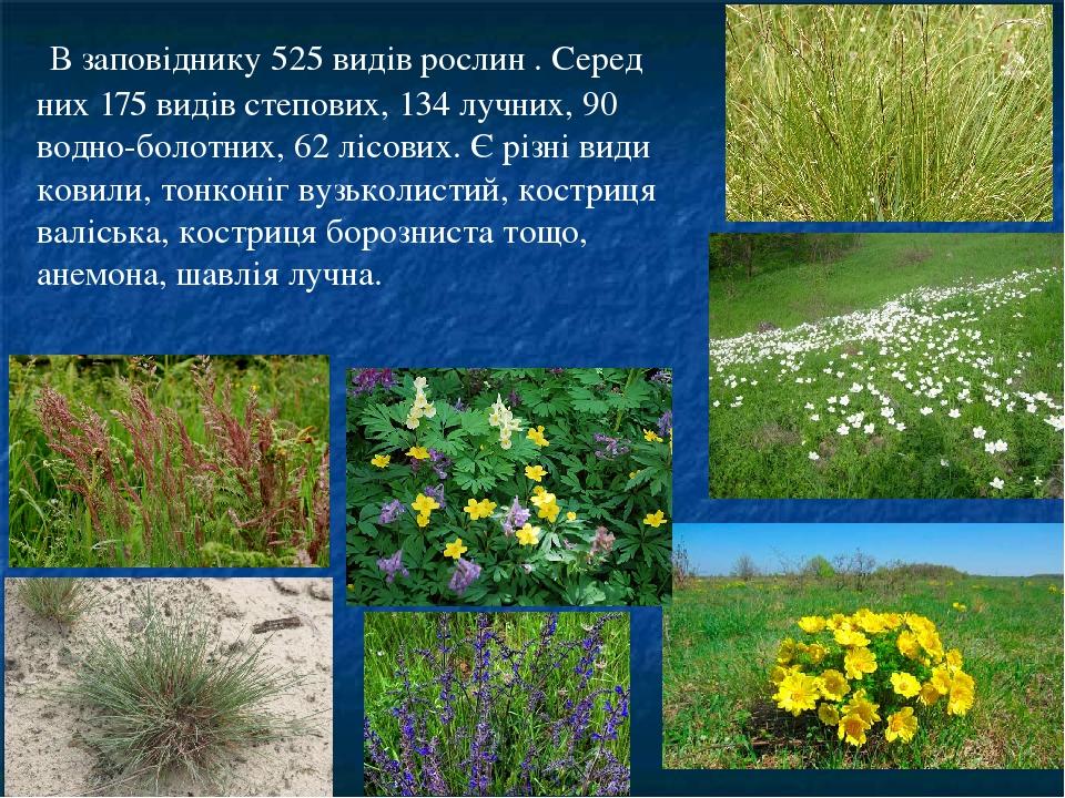 В заповіднику 525 видів рослин . Серед них 175 видів степових, 134 лучних, 90 водно-болотних, 62 лісових. Є різні види ковили, тонконіг вузьколист...