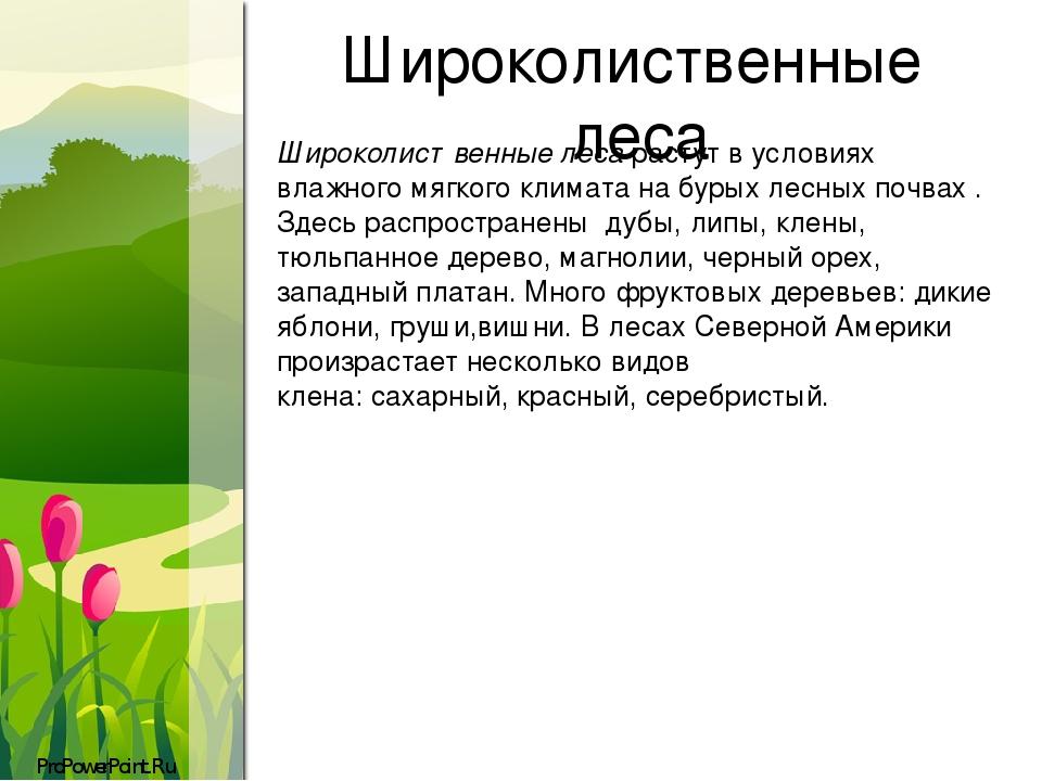 Широколиственные леса Широколиственные леса растут в условиях влажного мягкого климата на бурых лесных почвах . Здесь распространены дубы, липы, кл...
