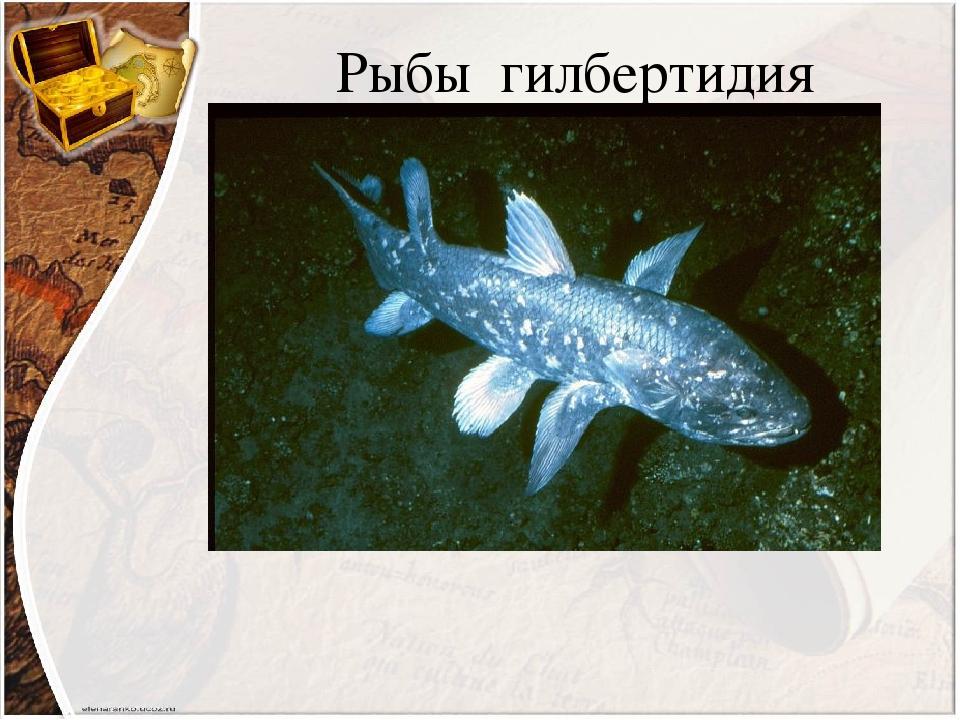 Рыбы гилбертидия