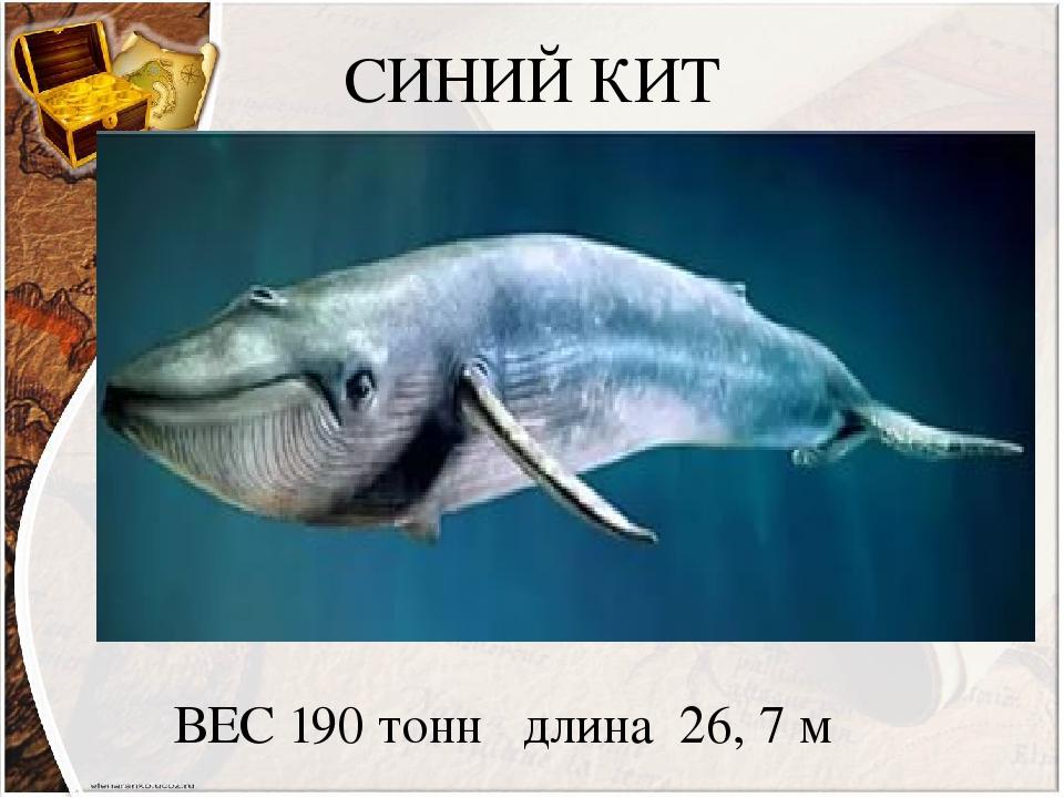 СИНИЙ КИТ ВЕС 190 тонн длина 26, 7 м
