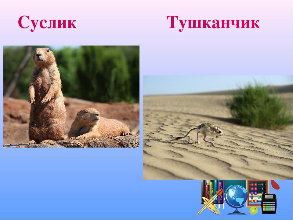 Суслик Тушканчик