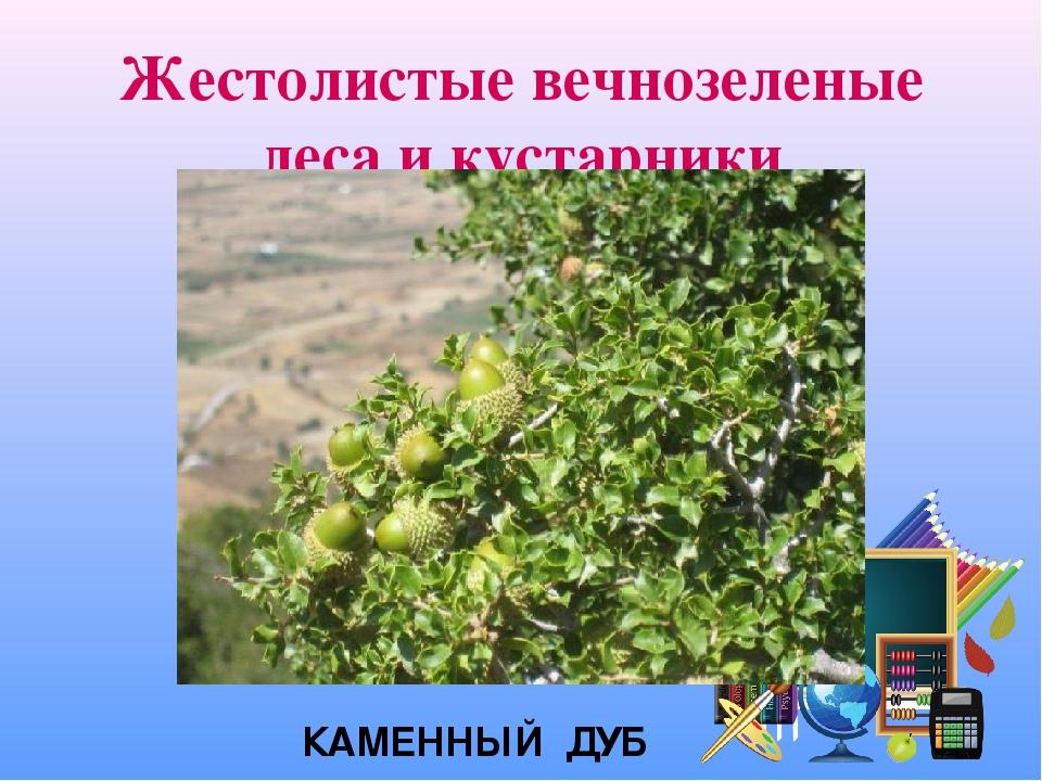 Жестолистые вечнозеленые леса и кустарники КАМЕННЫЙ ДУБ