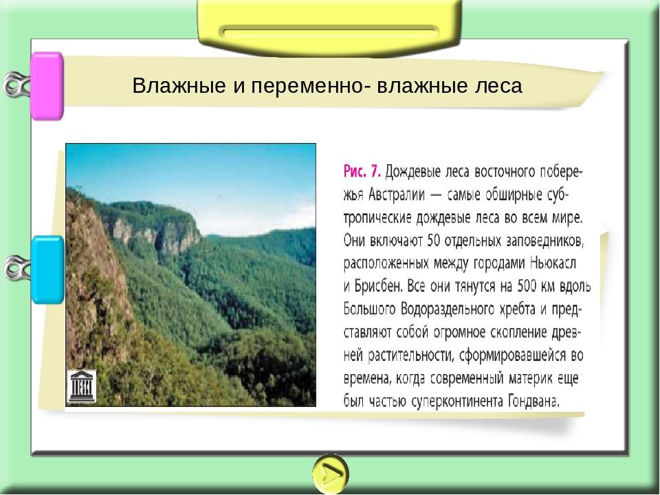 Джунгли Влажные и переменно- влажные леса