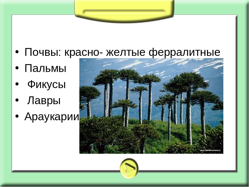 Почвы: красно- желтые ферралитные Пальмы Фикусы Лавры Араукарии