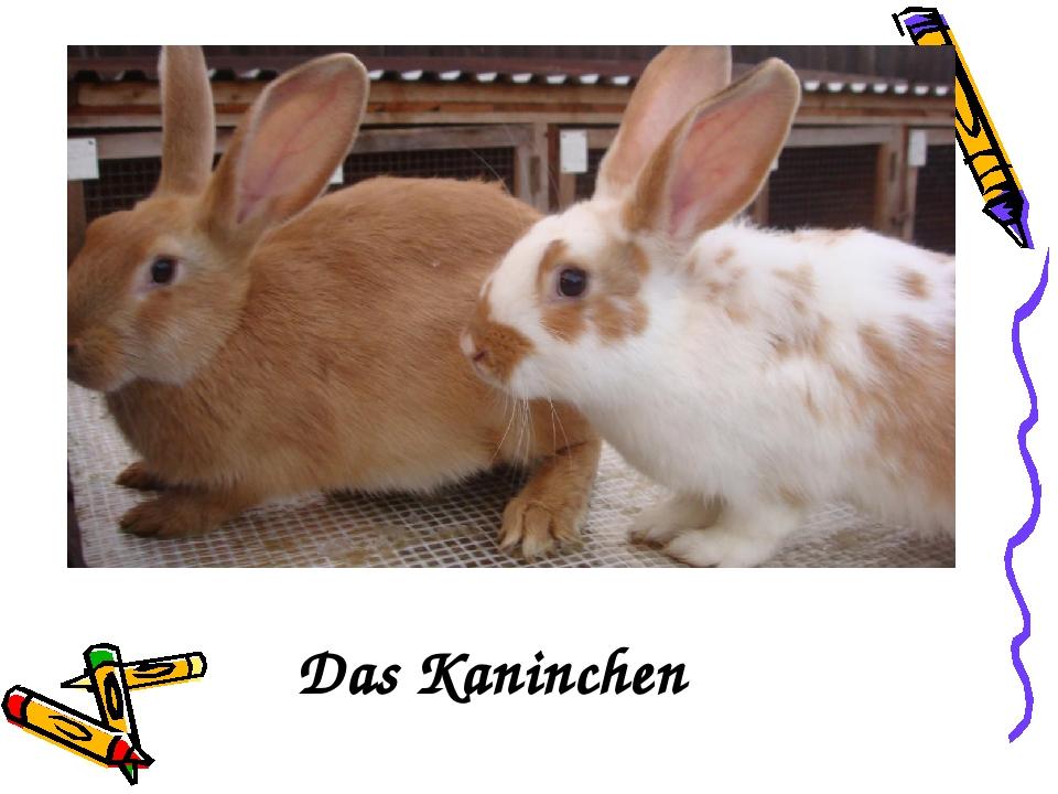 der Das Kaninchen