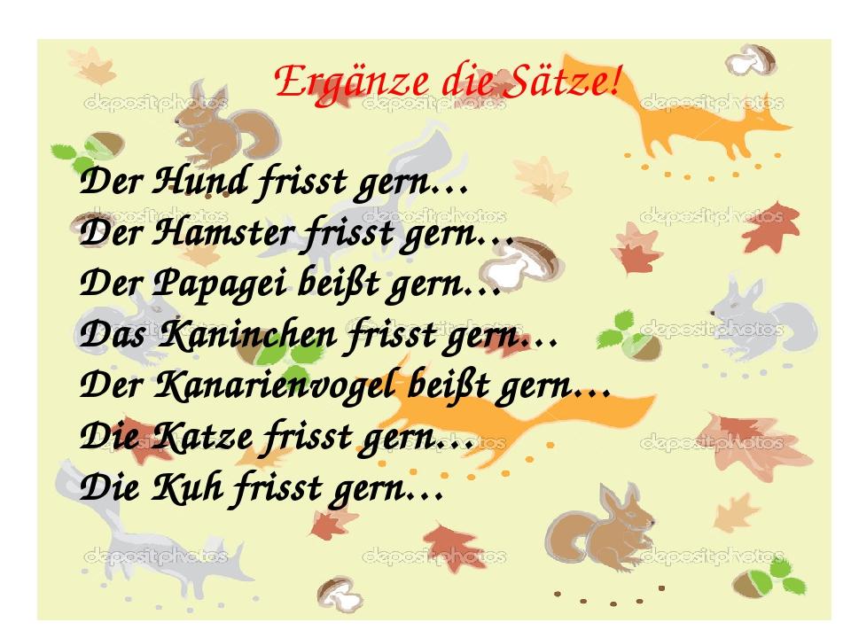 Ergänze die Sätze! Der Hund frisst gern… Der Hamster frisst gern… Der Papagei beißt gern… Das Kaninchen frisst gern… Der Kanarienvogel beißt gern… ...