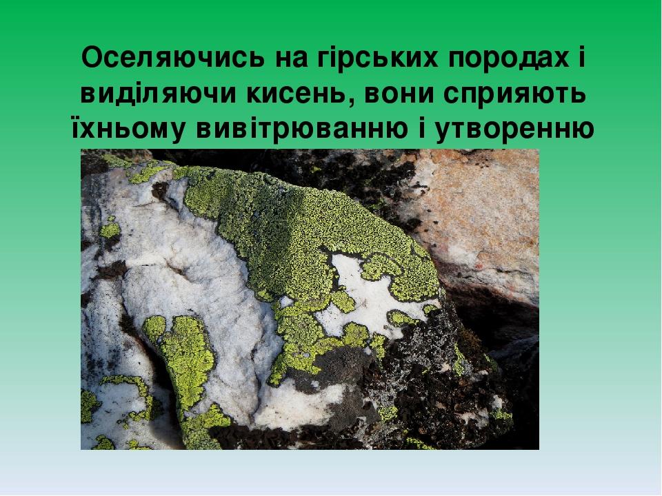 Оселяючись на гірських породах і виділяючи кисень, вони сприяють їхньому вивітрюванню і утворенню ґрунту, на якому можуть оселятися рослини