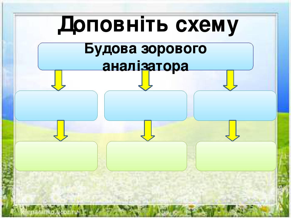 Доповніть схему Будова зорового аналізатора