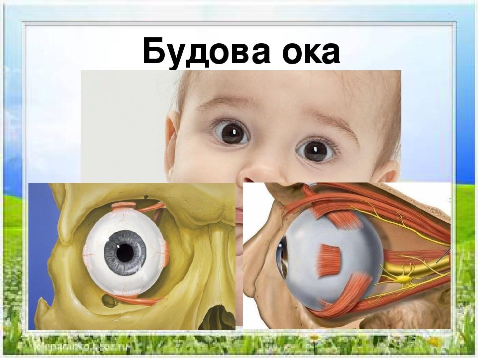 Будова ока Будова ока
