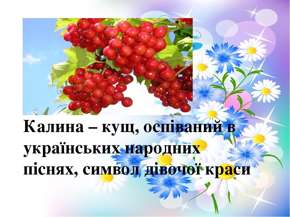 Калина – кущ, оспіваний в українських народних піснях, символ дівочої краси