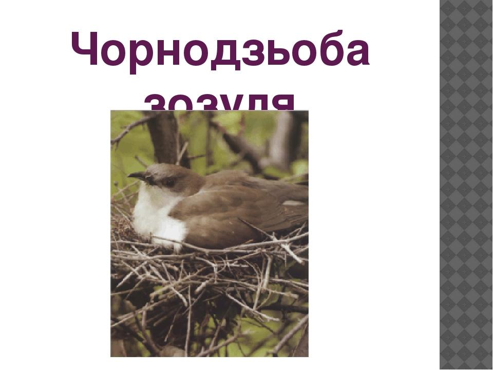Чорнодзьоба зозуля