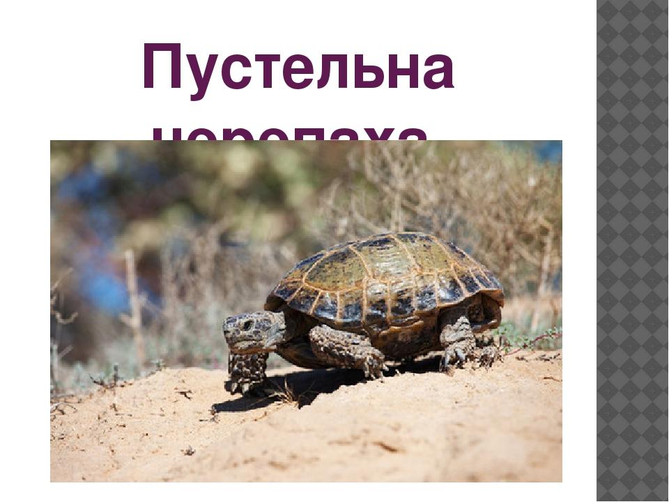 Пустельна черепаха