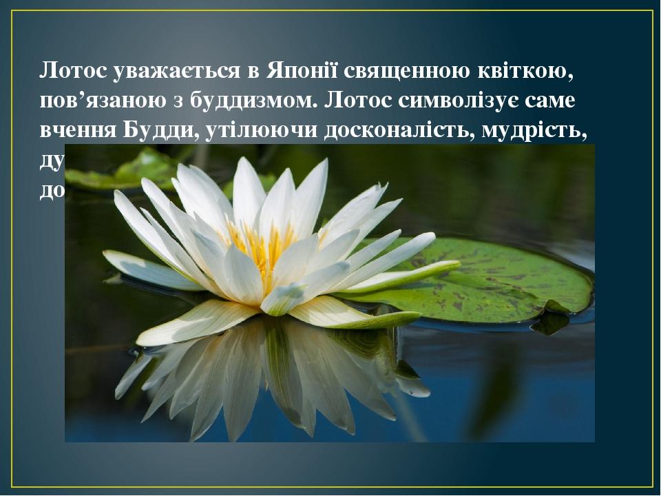 Лотос уважається в Японії священною квіткою, пов'язаною з буддизмом. Лотос символізує саме вчення Будди, утілюючи досконалість, мудрість, духовну ч...